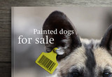 PaintedDogs1